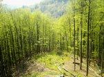 Holzeinschlag oder auch Holzfällung ist der erste Schritt der Holzernte. Anschließend folgt noch die Holzrückung - also der Transport der gefällten Bäume zum Sammelort.