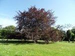 Baumpflege mit Hilfe von Mykorrhiza