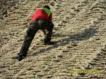 Erosionsschutz mit Wollano-Schafwollmatten